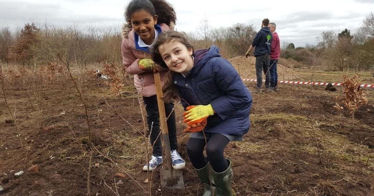 Trees for Schools | Trees for Cities